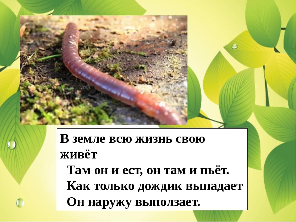 В земле всю жизнь свою живёт Там он и ест, он там и пьёт. Как только дождик в...