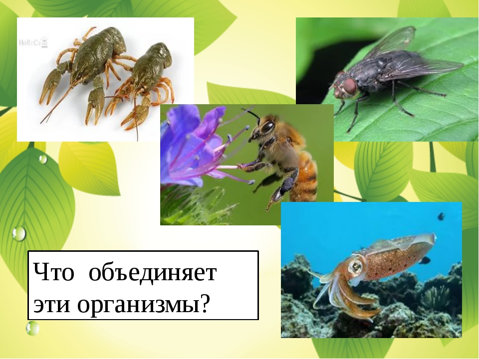 Что объединяет эти организмы?