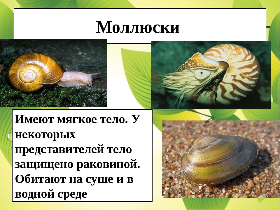 Моллюски Имеют мягкое тело. У некоторых представителей тело защищено раковино...