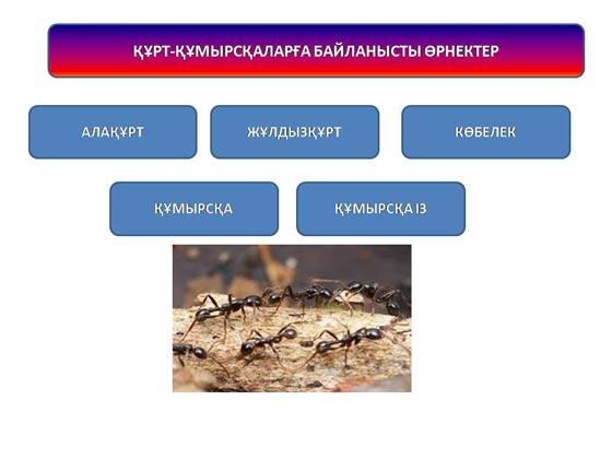 http://tarmpi-innovation.kz/editor/images/556-17cc491db54d180c1926589291c65b87.jpg