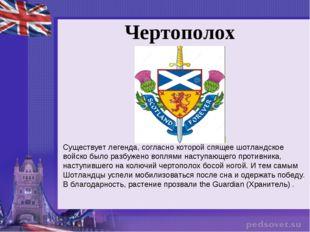 Чертополох Существует легенда, согласно которой спящее шотландское войско был