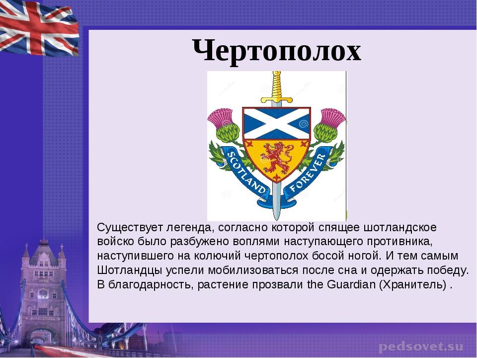 Чертополох Существует легенда, согласно которой спящее шотландское войско был...