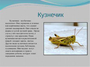 Кузнечик Кузнечики - необычные насекомые .Они окрашены в зеленые или коричне