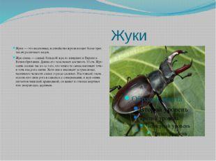 Жуки Жуки — это насекомые; в семейство жуков входят более трех тысяч различн