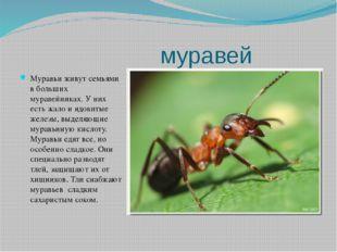 муравей Муравьи живут семьями в больших муравейниках. У них есть жало и ядов