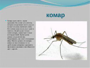 комар Комар серого цвета с двумя крыльями .На голове есть хоботок, которым о