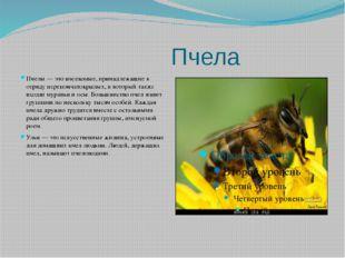Пчела Пчелы — это насекомые, принадлежащие к отряду перепончатокрылых, в кот