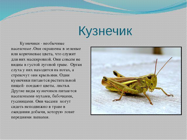 Кузнечик Кузнечики - необычные насекомые .Они окрашены в зеленые или коричне...