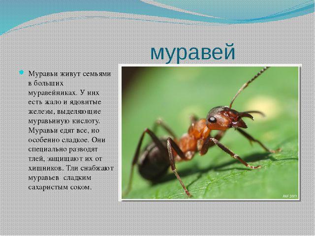муравей Муравьи живут семьями в больших муравейниках. У них есть жало и ядов...