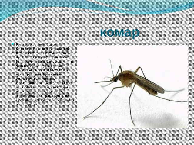 комар Комар серого цвета с двумя крыльями .На голове есть хоботок, которым о...