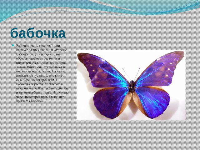 бабочка Бабочки очень красивы! Они бывают разных цветов и оттенков. Бабочки с...