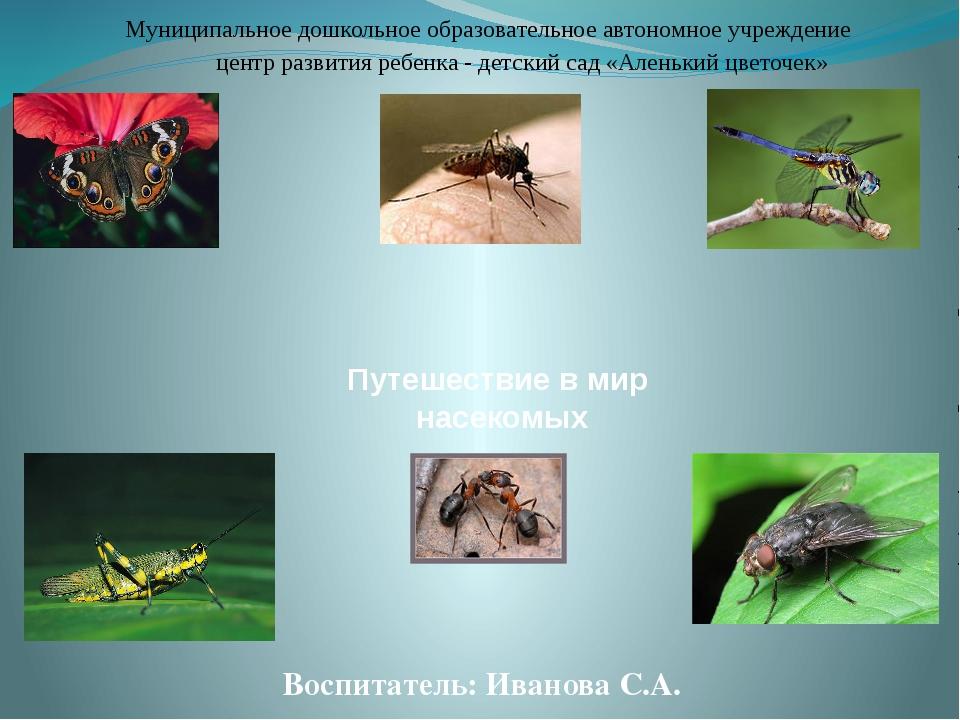 Путешествие в мир насекомых Воспитатель: Иванова С.А. Муниципальное дошкольн...