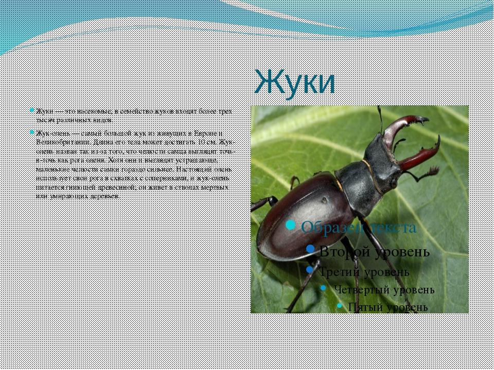 Жуки Жуки — это насекомые; в семейство жуков входят более трех тысяч различн...
