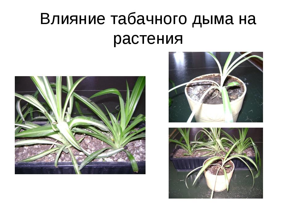Влияние табачного дыма на растения