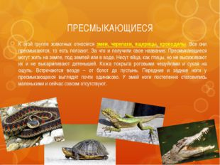 ПРЕСМЫКАЮЩИЕСЯ К этой группе животных относятся змеи, черепахи, ящерицы, крок