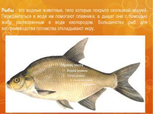 Рыбы - это водные животные, тело которых покрыто скользкой чешуей. Передвигат
