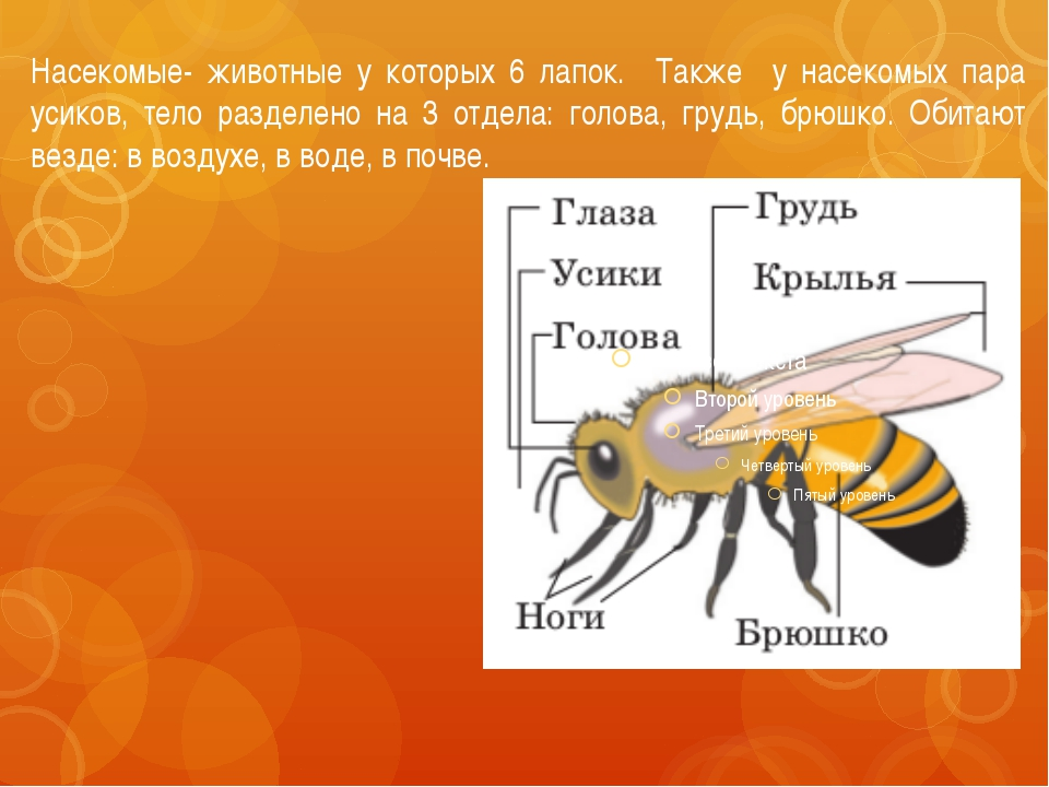 Насекомые- животные у которых 6 лапок. Также у насекомых пара усиков, тело ра...