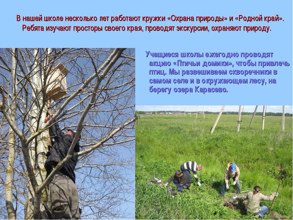 В нашей школе несколько лет работают кружки «Охрана природы» и «Родной край»...