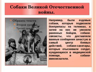 Собаки Великой Отечественной войны. Например, были ездовые собаки, которые по