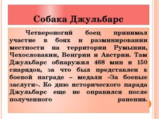 Собака Джульбарс Четвероногий боец принимал участие в боях и разминировании