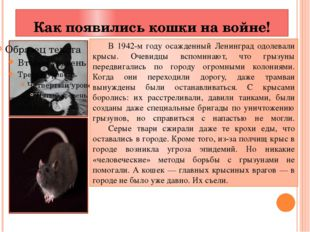 Как появились кошки на войне! В 1942-м году осажденный Ленинград одолевали к