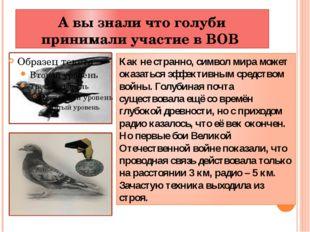 А вы знали что голуби принимали участие в ВОВ Как не странно, символ мира мож