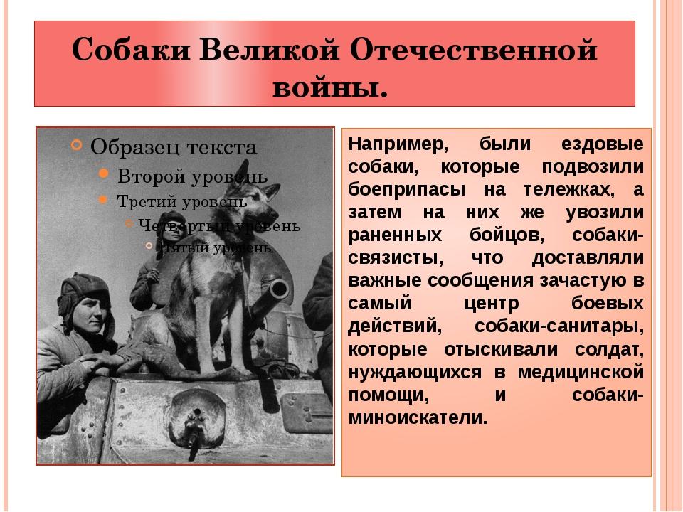 Собаки Великой Отечественной войны. Например, были ездовые собаки, которые по...
