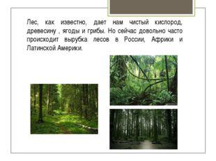 Лес, как известно, дает нам чистый кислород, древесину , ягоды и грибы. Но се