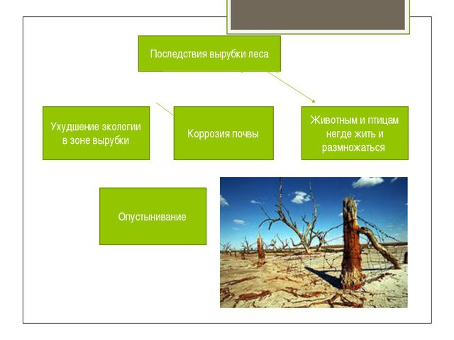 Последствия вырубки леса Ухудшение экологии в зоне вырубки Коррозия почвы Жив...