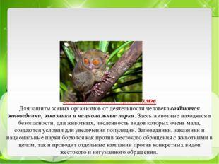 Защита живых организмов Для защиты живых организмов от деятельности человека