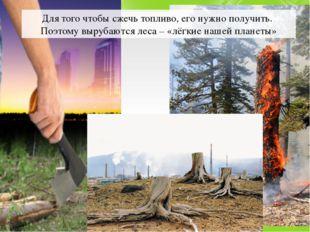 Для того чтобы сжечь топливо, его нужно получить. Поэтому вырубаются леса – «