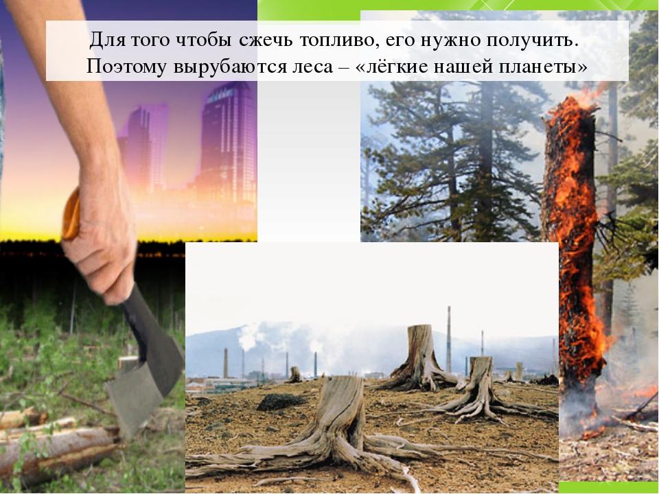 Для того чтобы сжечь топливо, его нужно получить. Поэтому вырубаются леса – «...
