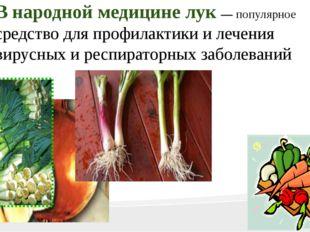 В народной медицине лук — популярное средство для профилактики и лечения вир