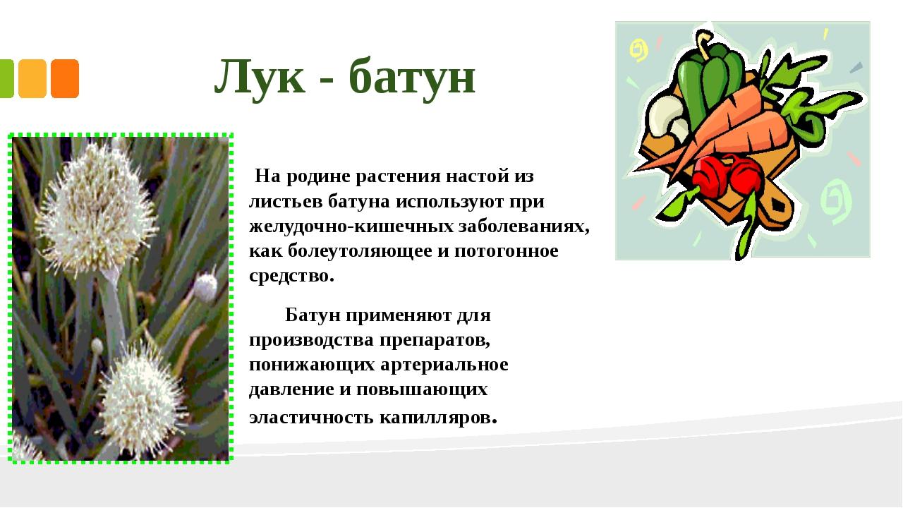 На родине растения настой из листьев батуна используют при желудочно-кишечны...