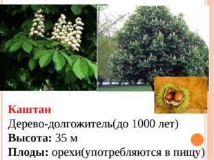 Каштан Дерево-долгожитель(до 1000 лет) Высота: 35 м Плоды: орехи(употребляютс