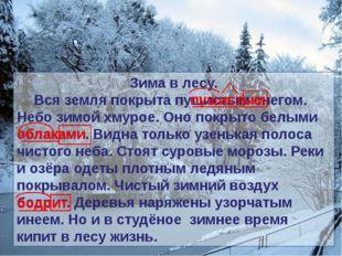 Зима в лесу. Вся земля покрыта пушистым снегом. Небо зимой хмурое. Оно покры