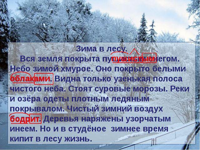 Зима в лесу. Вся земля покрыта пушистым снегом. Небо зимой хмурое. Оно покры...