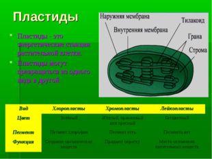 Пластиды Пластиды - это энергетические станции растительной клетки. Пластиды