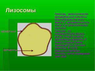 Лизосомы МЕМБРАНА ФЕРМЕНТЫ Лизосомы - микроскопические одномембранные органел