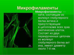 Микрофиламенты Микрофиламенты— нити, состоящие из молекул глобулярного белк