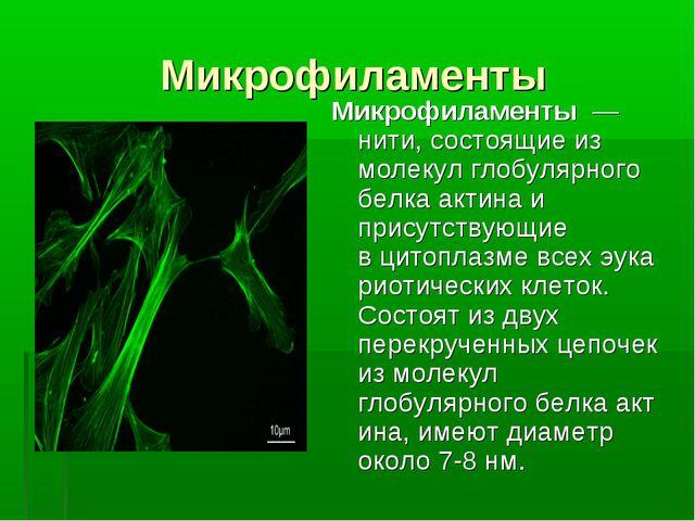 Микрофиламенты Микрофиламенты— нити, состоящие из молекул глобулярного белк...