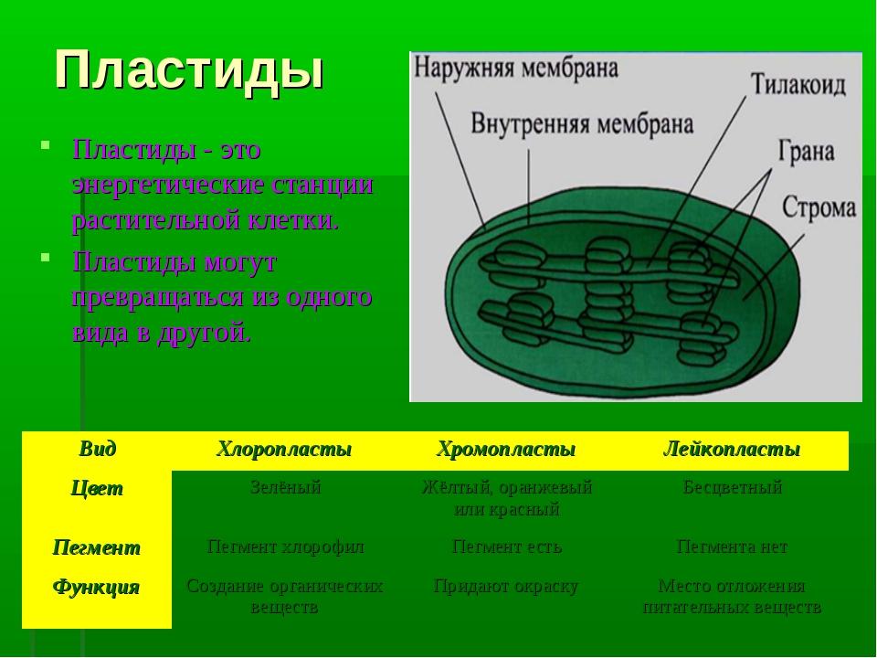 Пластиды Пластиды - это энергетические станции растительной клетки. Пластиды...