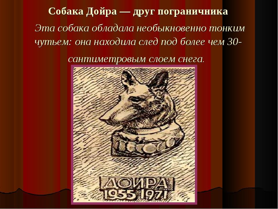 Собака Дойра — друг пограничника Эта собака обладала необыкновенно тонким чут...