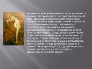 Черноморские морские коньки красиво ухаживают за самками - это происходит в е