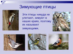 Зимующие птицы Эти птицы никуда не улетают, зимуют в наших краях, поэтому их