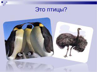 Это птицы?