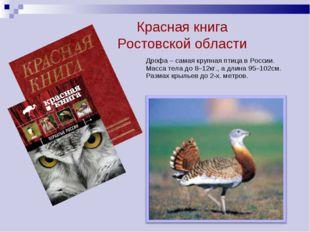. Дрофа – самая крупная птица в России. Масса тела до 8–12кг., а длина 95–102
