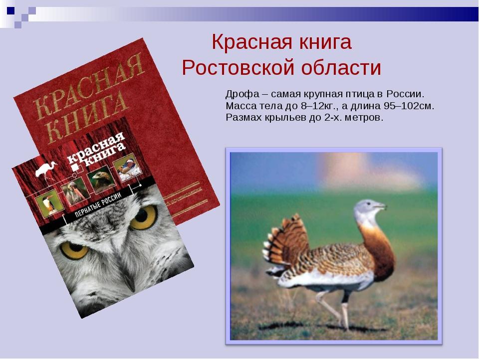 . Дрофа – самая крупная птица в России. Масса тела до 8–12кг., а длина 95–102...
