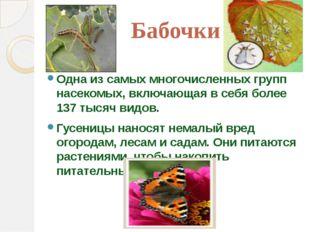 Бабочки Одна из самых многочисленных групп насекомых, включающая в себя более