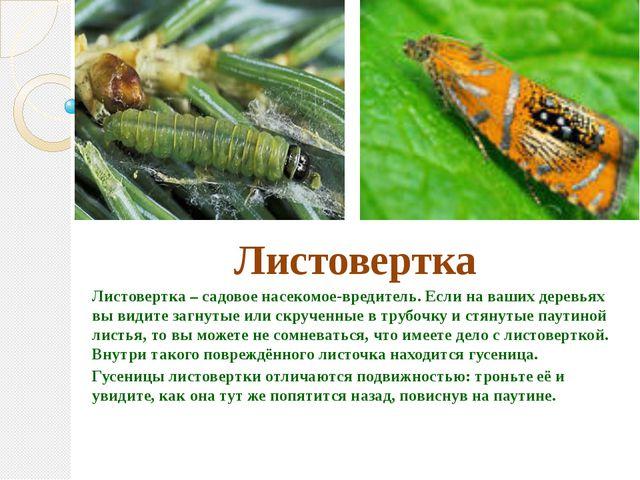 Листовертка Листовертка – садовое насекомое-вредитель. Если на ваших деревья...